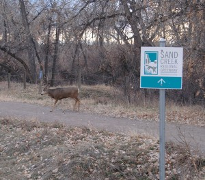 Deer at Star K Ranch